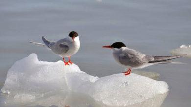 Photo of İklim değişikliğinin bir canlı türüne olan ilk etkisi açıklandı