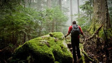Photo of Doğa Yürüyüşü: Tek Başına Doğa Gezisi ve Kamp İçin Güvenlik