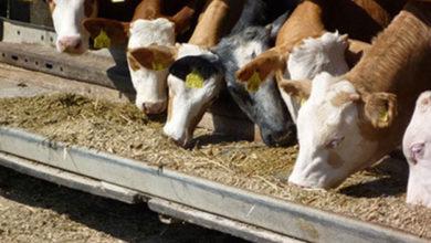 Photo of Hayvancılık Dairesinden aflatoksin konusunda uyarı