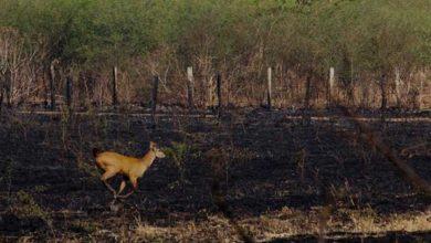 Photo of Brezilya'daki orman yangını bölgedeki türleri tehdit ediyor