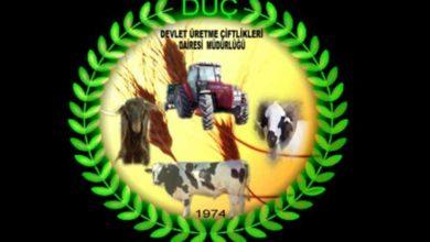 Photo of Büyükbaş hayvan ekipmanları açık artırma ile satışa sunulacak