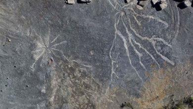 Photo of Dünyanın en eski ağaç fosilleri New York'ta bulundu