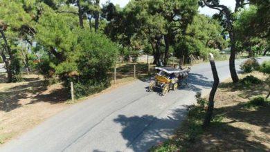 Photo of Adalar'da ruam hastalığına yakalanan 81 at itlaf edildi