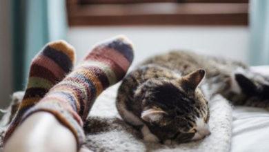 Photo of Kedi sahibi olmak, ruh sağlığına iyi geliyor