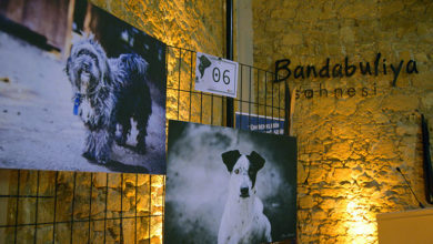 Photo of LTB Hayvan Barınağı yararına sergi düzenlendi