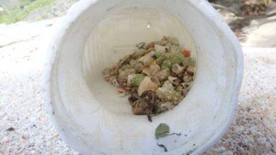 Photo of Plastik kirliliği 'yarım milyon keşiş yengecini öldürdü'