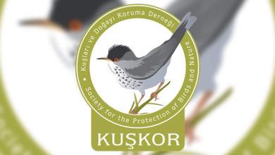 Photo of KUŞKOR, Av ve Avla İlgili Yaban Hayatını Düzenleme (Değişiklik) Yasası hakkında basın açıklaması yaptı