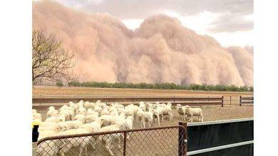 Photo of Avustralya'da kum, dolu ve sel felaketi