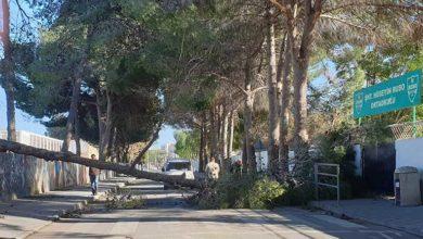 Photo of Okullar Yolu devrilen ağaç sebebiyle kapandı