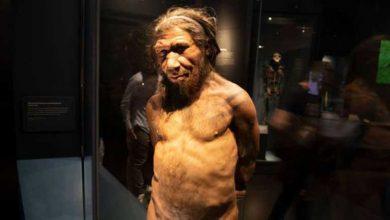 Photo of Neandertaller 'yüzebiliyor ve dalabiliyordu'