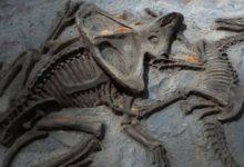 Photo of Dinozorda kanser tespit edildi