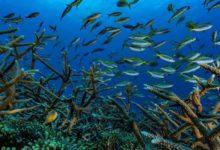 Photo of Mercan resifleri 2100'ü görmeyecek