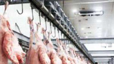 Photo of Mezbahalarda kesilen hayvanlar yarından itibaren kategorisine göre mühürlenecek