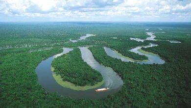 Photo of Amazonların yüzde 20'si artık karbondioksit kaynağı