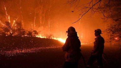 Photo of Yangınlar Avustralya'daki ormanların yüzde 21'ini yok etti