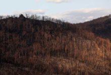 Photo of Avustralyalıların dörtte üçünden fazlası yangınlardan etkilendi
