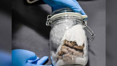 Photo of ABD gümrük yetkilileri Kanada sınırında 'kavanoz içinde insan beyni' buldu