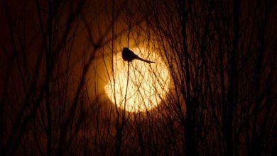 Photo of Erkek kuşlar parlak tüyle değil zekalarıyla dişileri etkiliyor