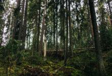 Photo of ABD'de kaybedilen yüzük 47 yıl sonra Finlandiya'da bir ormanda bulundu