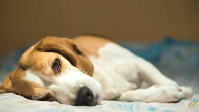 Photo of Rusya'da bir kişi, akrabalarının köpeğini öldürdüğü için 3 yıl 9 ay hapis cezasına çarptırıldı