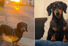 Photo of Evden kaçan 'sosis köpek', otobüse binerek 30 kilometre uzaktaki deniz kıyısına gitti