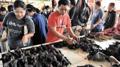 Photo of Çin'de salgın durdu, vahşi hayvan pazarları yeniden açıldı