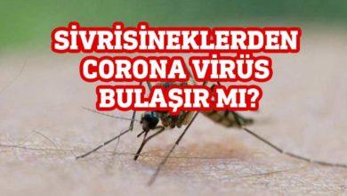 Photo of DSÖ açıkladı: Sivrisineklerden corona virüs bulaşır mı?