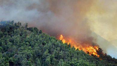 Photo of Güney'de yangınlarla mücadele için yeni teknolojiler tedarik edilecek