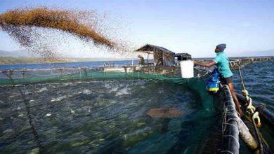 Photo of Çiftlik balıklarında hastalık riski artıyor