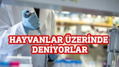 Photo of Avustralyalı bilim insanları aşı denemelerine başladı