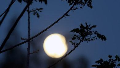 Photo of Kıbrıs'ta Pembe Ay büyüsü