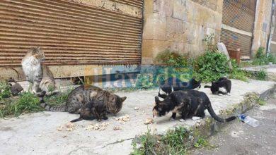 Photo of Sokak hayvanları unutulmadı