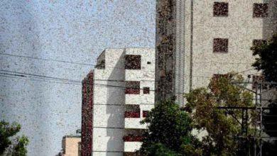 Photo of Çekirge istilası yüzünden OHAL ilan ettiler