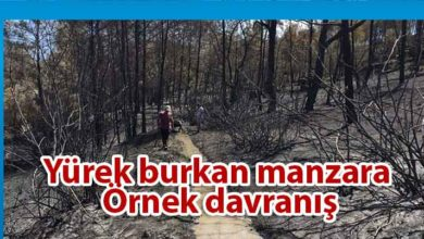 Photo of Anıt Zeytin Ağaçları'na giden su kanalları temizleniyor