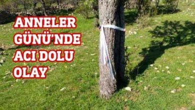 Photo of Ankara'da 5 çocuk annesi kadın, ayı saldırısında hayatını kaybetti