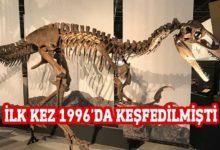Photo of 70 milyon yıllık dev dinozor fosili bulundu