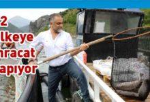 Photo of ABD'deki genel müdürlüğü bırakıp Karadeniz somonu yetiştirmeye başladı, yılda 500 milyon lira kazanıyor