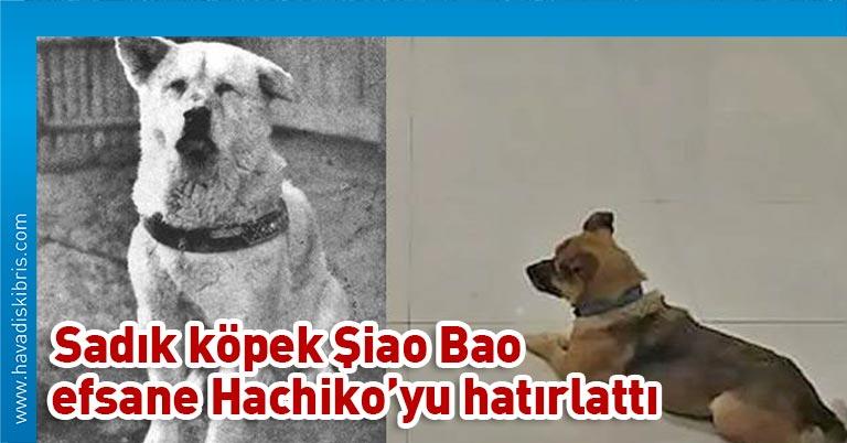 Çin'in Hubey eyaletine bağlı Vuhan kentinde sadık bir köpek, Kovid-19'dan ölen sahibini hastanede aylarca bekledi