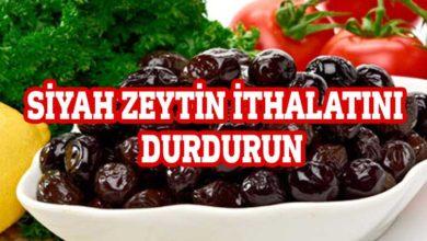 Photo of Zeytin üreticileri hükümete seslendi