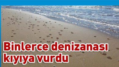 Photo of Kaplıca'da şok görüntüler !