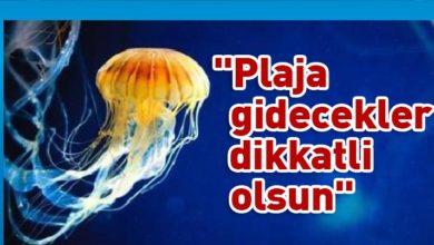 Photo of Rum Balıkçılık ve Deniz Araştırmaları Dairesi uyardı