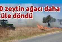Photo of Paşaköy'de yangın !