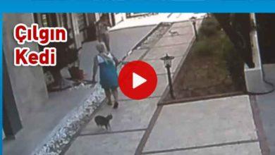 Photo of Köpekli aileye saldıran kedi, hem korkuttu hem güldürdü