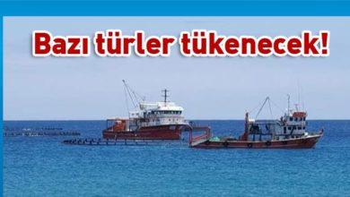 Photo of Yasak Orkinoks avı yapan gırgır gemileri yine geldi
