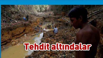 Photo of Amazon'un son kabilesi altın avcıları nedeniyle tehlikede
