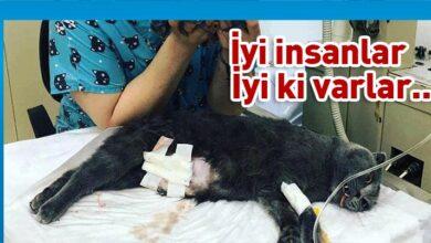 Photo of Doğum yapamayan kediye sezaryen yapıldı
