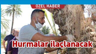Photo of TİKA Lefke'deki Hurma ağaçlarına sahip çıktı