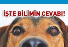 Photo of Tehlikede olsanız köpeğiniz sizi kurtarır mı?