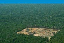 Photo of Araştırma: Her 6 saniyede bir futbol sahası kadar orman yok oldu