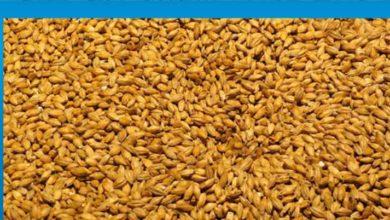 Photo of Tahıl alım fiyatları belirlendi